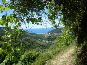 VOGELE Legnaro to San Bartolomeo2