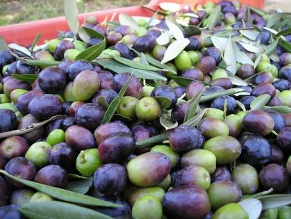 Fresh Ascolana Olives