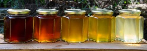 Shades of Honey